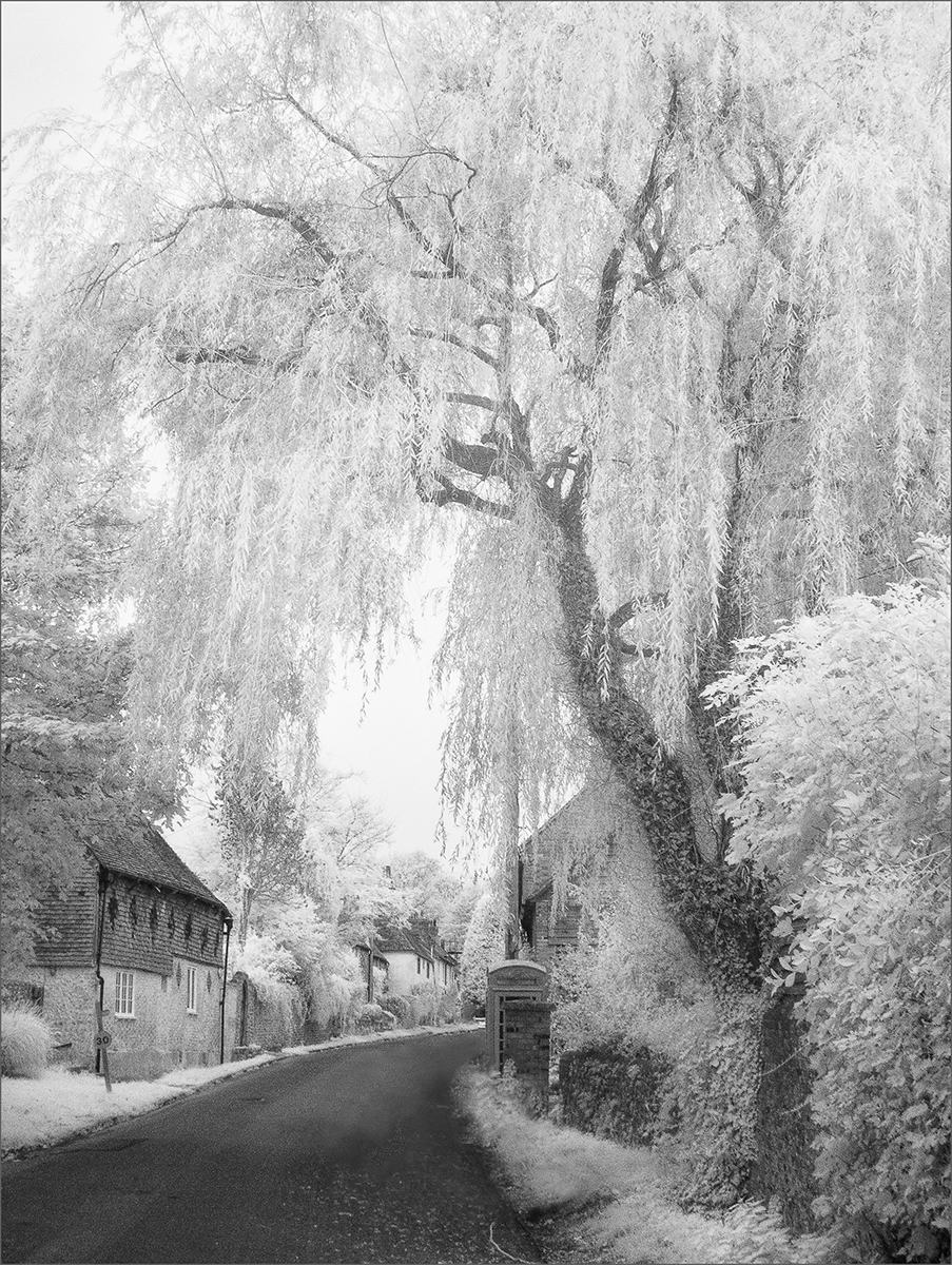 Wilmington, East Sussex - Janice Payne IR